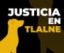 Exigen justicia para un perro asesinado a golpes a manos de 8 personas
