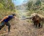 Un elefante reconoce al veterinario que salvó su vida hace doce años